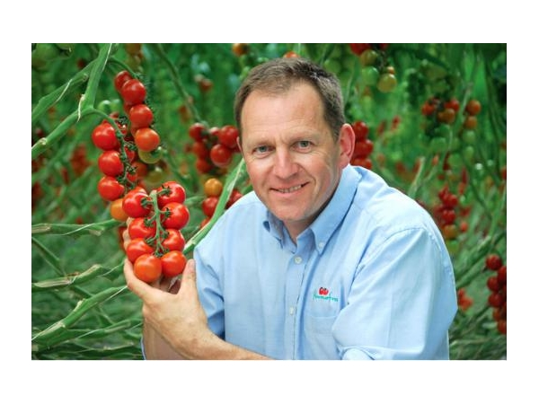 Thanks to LED lighting, English tomatoes keep their normal production in winter